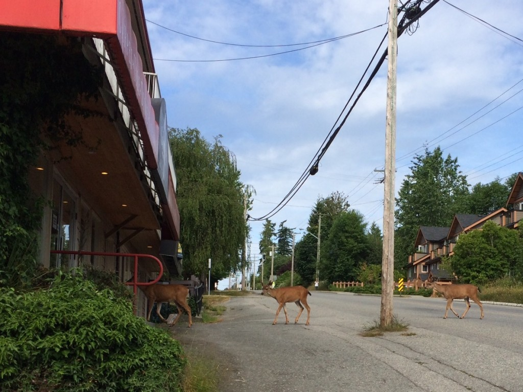 Deer shopping at the local paint store